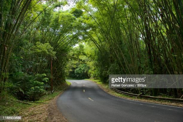 road passing through forest, guavate, patillas, puerto rico - paisajes de puerto rico fotografías e imágenes de stock