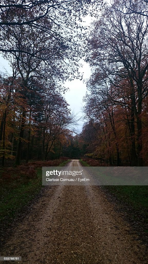 Road Passing Through Forest In Autumn : Foto stock