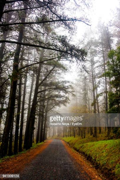 Road Passing Through Forest In Winter