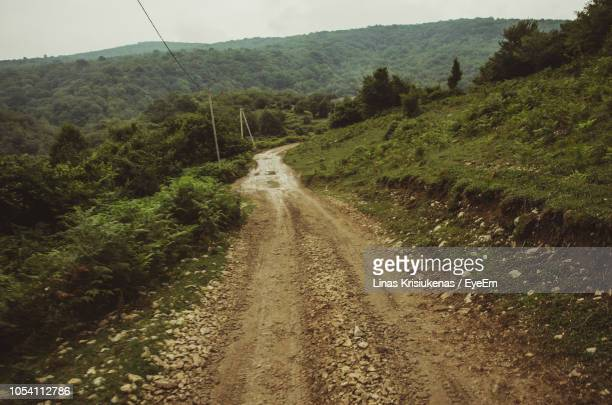 road passing through forest - toughness stock pictures, royalty-free photos & images