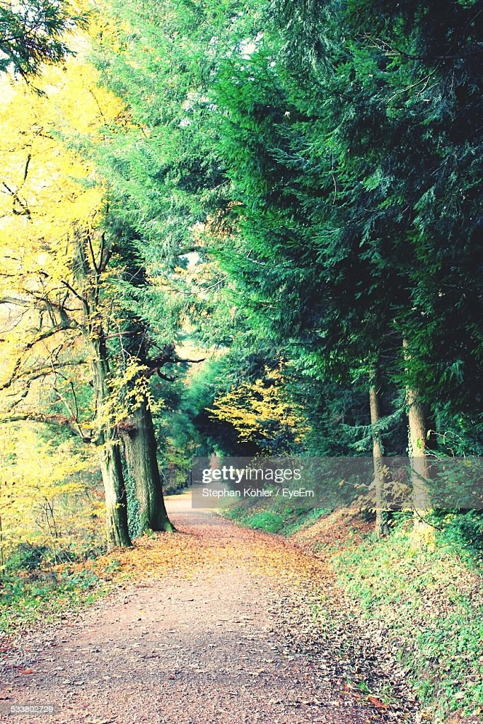 Road Passing Through Forest : Foto stock