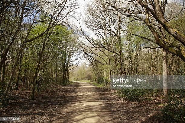 road passing through forest - bortes stockfoto's en -beelden