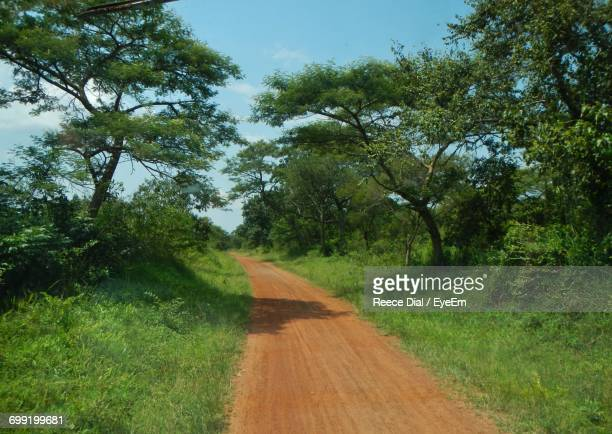 road passing through forest - gulu stock photos and pictures