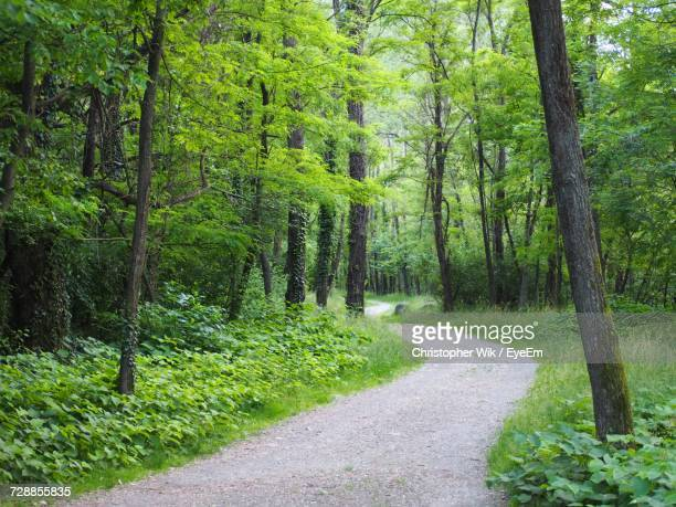 road passing through forest - single track stock pictures, royalty-free photos & images