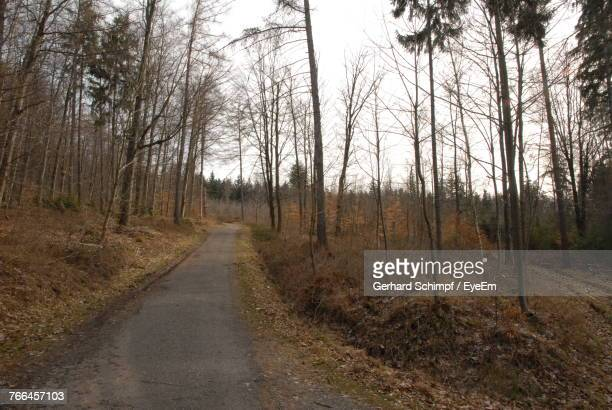 road passing through forest - gerhard schimpf stock pictures, royalty-free photos & images