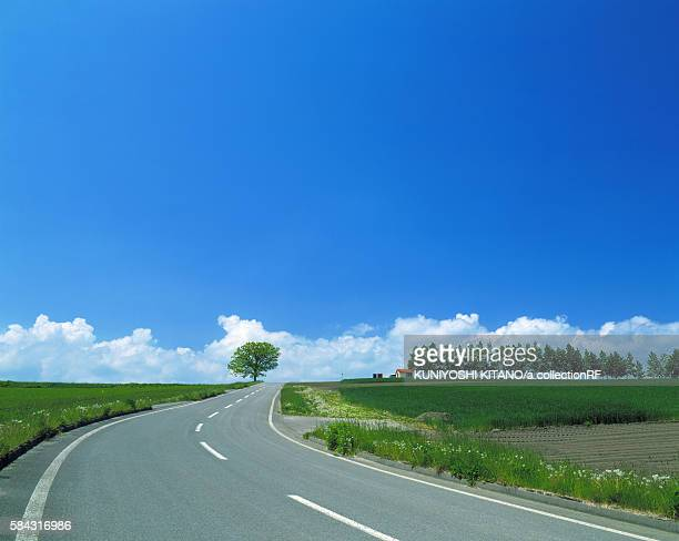 road passing through green fields - biei town stock pictures, royalty-free photos & images