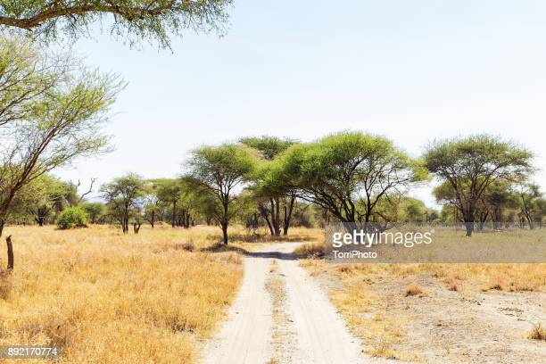 road passing through tarangire national park with acacia trees. sunny landscape - tarangire national park stock pictures, royalty-free photos & images
