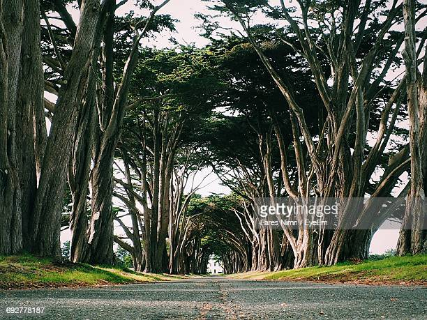 Road Passing Through Trees