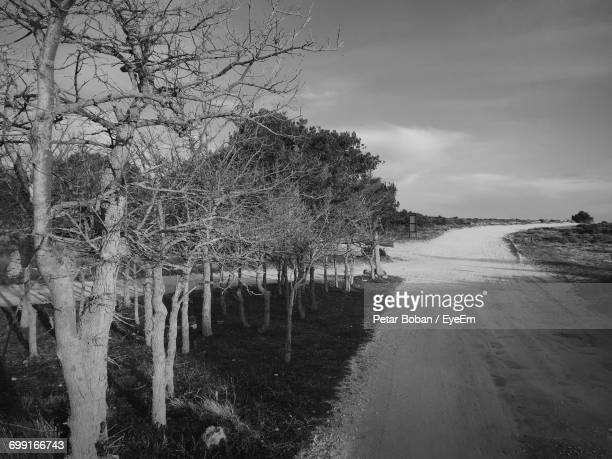 road passing through trees - boban stock pictures, royalty-free photos & images
