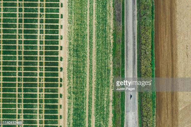 road (with cyclist) running through agricultural fields - crop stock pictures, royalty-free photos & images
