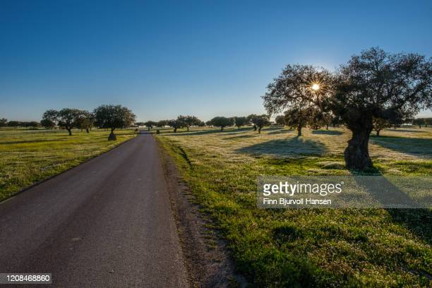 road running trough a field of gras, flowers and olive trees - finn bjurvoll stock pictures, royalty-free photos & images