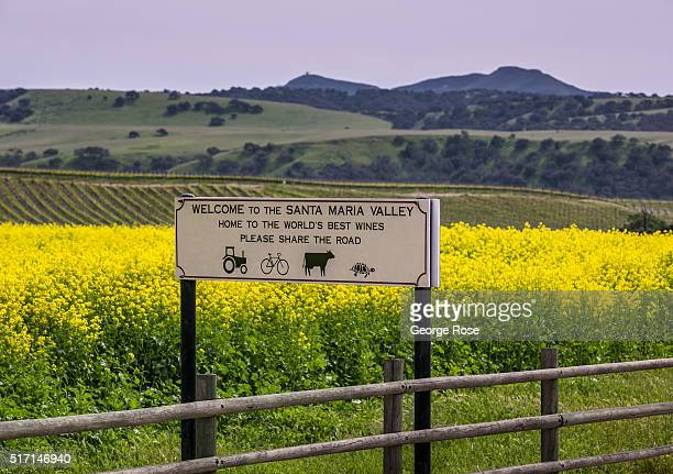 A road sign along Tepusquet Canyon Road warns of tractors and cows on March 22 near Santa Maria California Much of Southern and Central California...