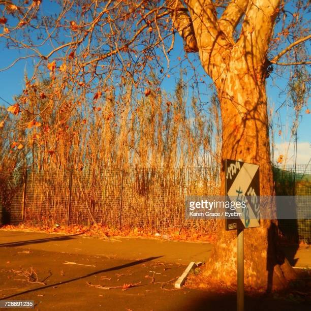Road Sign By Trees In Forest Against Clear Sky