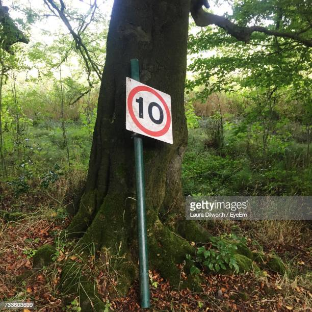 Road Sign In Forest