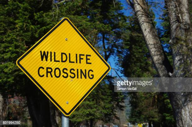 'wildlife crossing' road sign in mount beauty, victoria, australia - crossing sign stock pictures, royalty-free photos & images