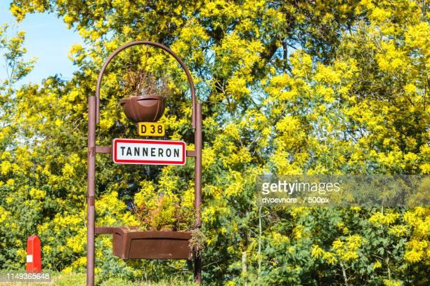 road sign of tanneron, france - mimosa albero foto e immagini stock