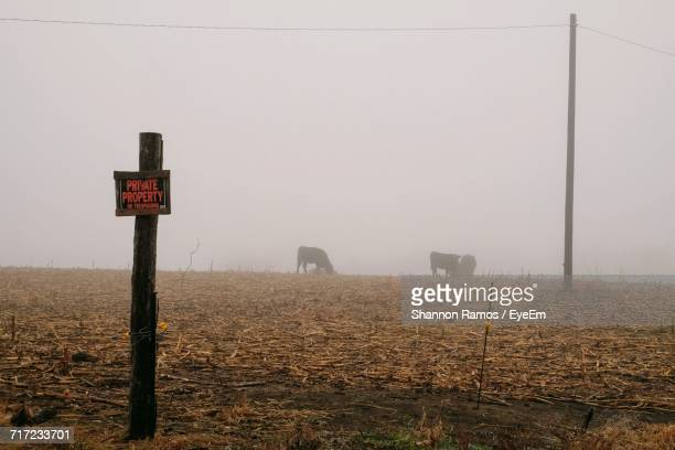 road sign on wooden post over field during foggy weather - segnale informativo foto e immagini stock