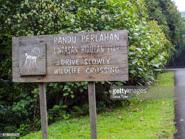 A road sign warning about wildlife crossing above the Datai Bay on the Malaysian island of Langkawi The first place to rise from the ocean during the...