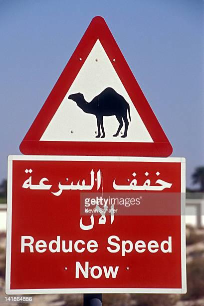 Road sign warning of camel crossing, Dubai, United Arab Emirates