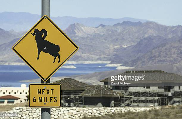 A road sign warns of desert bighorn sheep near a construction site as southern Nevada's population boom continues on September 24 2004 near Boulder...
