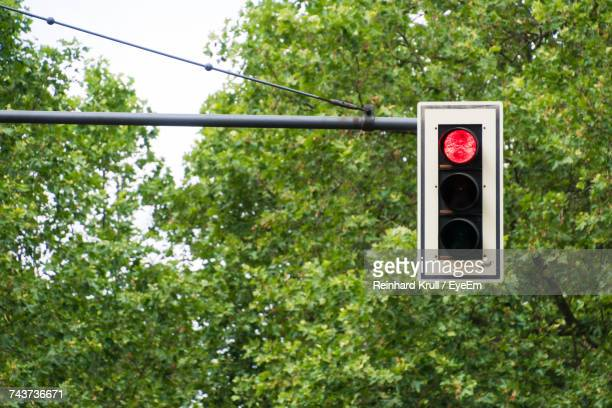 Road Signal With Red Light Against Trees