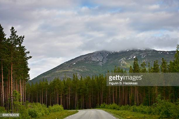 Road surrounded by trees and mountains. On the road through county Nordland, up north in Norway.