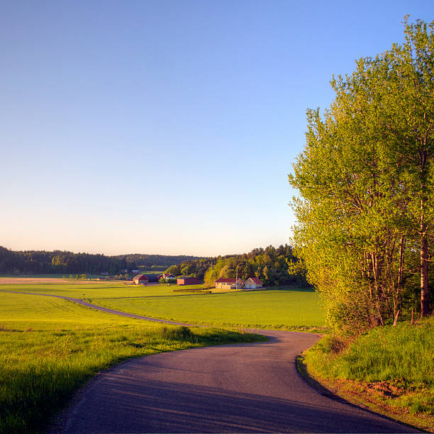 Road through a country landscape in spring greens