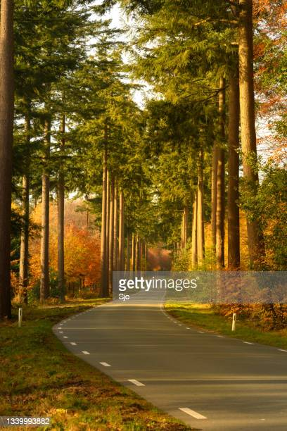 """road through a gold colored forest during a beautiful sunny fall day - """"sjoerd van der wal"""" or """"sjo""""nature stockfoto's en -beelden"""