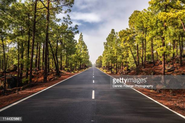 road through a green forest on tenerife - vanishing point stock pictures, royalty-free photos & images