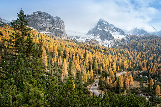 Road through a Larch (Conifers) Forest