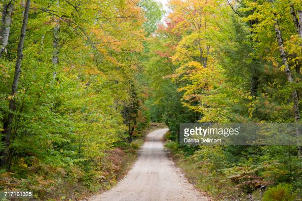 road through autumn forest, hiawatha national forest, upper peninsula, michigan, usa - hiawatha national forest stock pictures, royalty-free photos & images