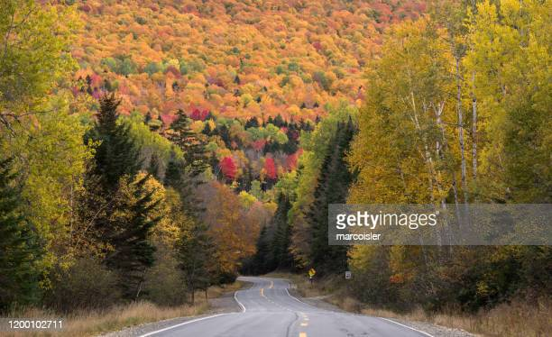 road through autumn forest, oquossoc, franklin county, maine, usa - oquossoc fotografías e imágenes de stock