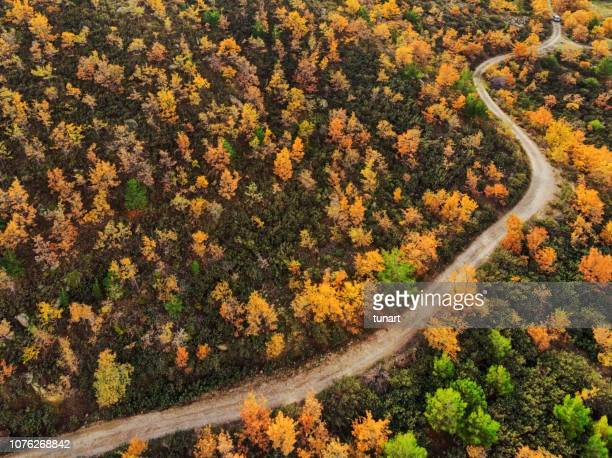 road through autumn landscape - october stock pictures, royalty-free photos & images
