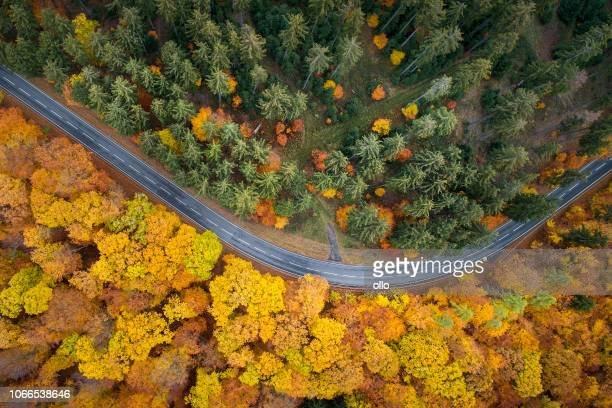 road through autumnal forest - aerial view - beauty in nature stock pictures, royalty-free photos & images