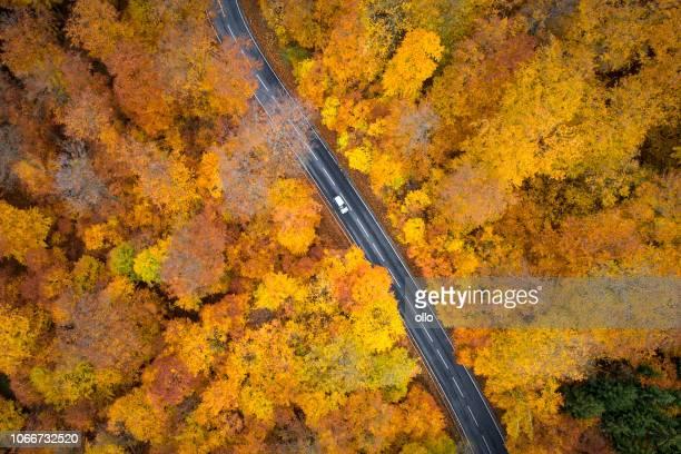 秋の森 - 空撮道路