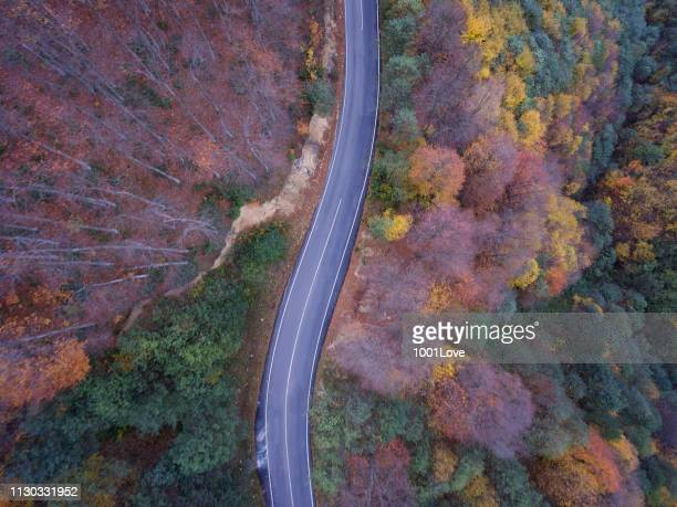 Road through autumnal forest - aerial view