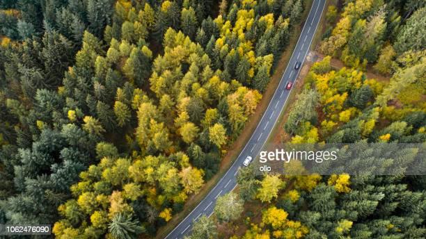 weg door herfst bos - kruin stockfoto's en -beelden
