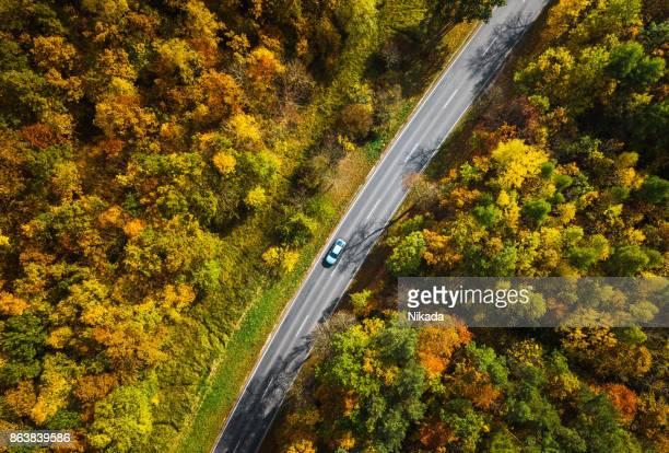 Vägen genom höstlig skog