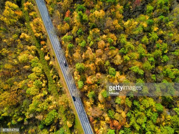 Straße durch Herbstliche Wald