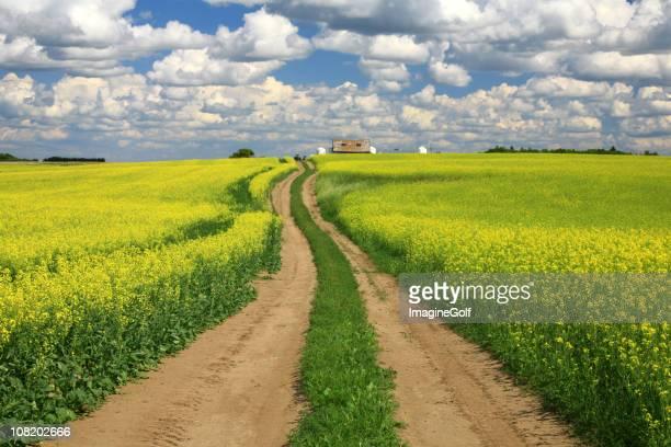 Road Through Canola
