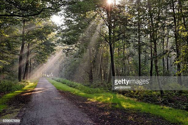 Road through forest, East Frisia, Lower Saxony, Germany