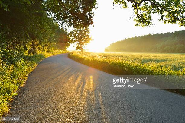 Road through Forest in the Morning with Sun