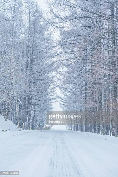 Road through forest in winter, Hokkaido, Japan