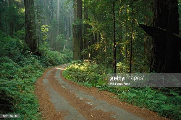 road through forest - en:public_domain stock pictures, royalty-free photos & images
