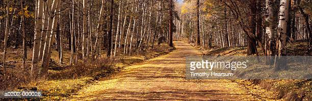 road through forest - timothy hearsum stock pictures, royalty-free photos & images