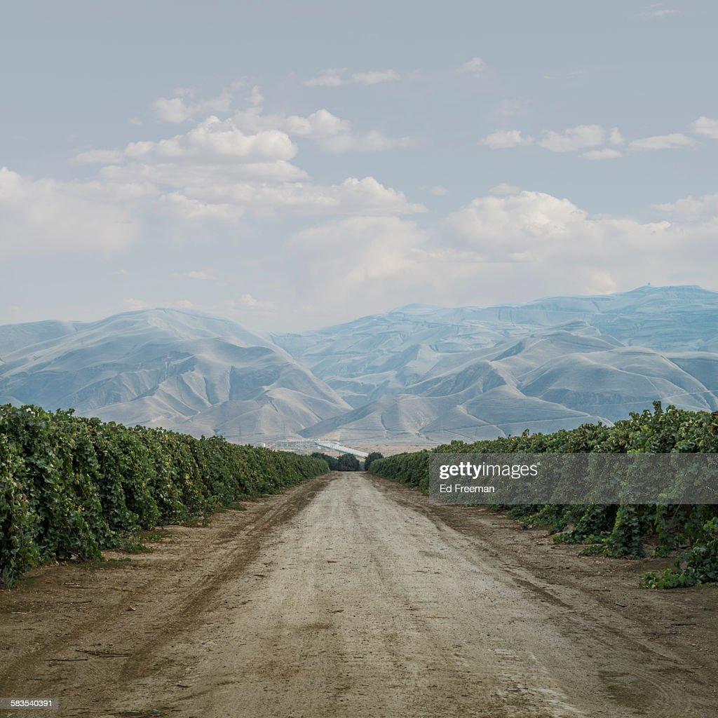 Road Through Grape Vines : Stock Photo