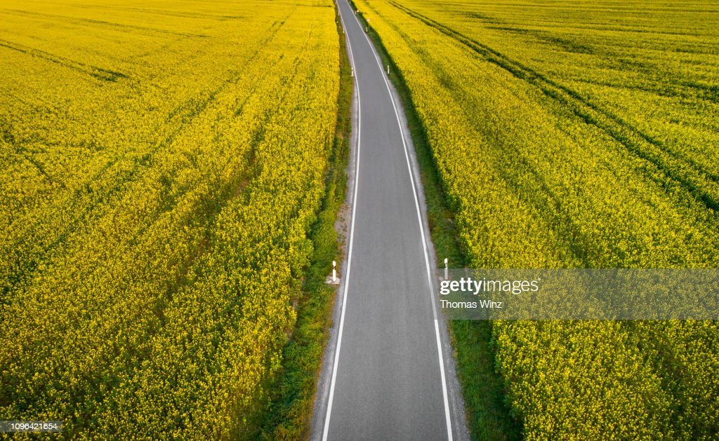 Road through rape fields from above : ストックフォト