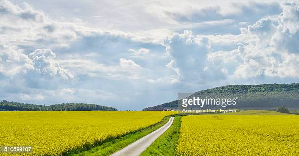 road through rapeseed fields - oilseed rape stock pictures, royalty-free photos & images