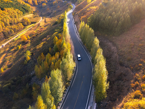 Road through the autumn forest - gettyimageskorea