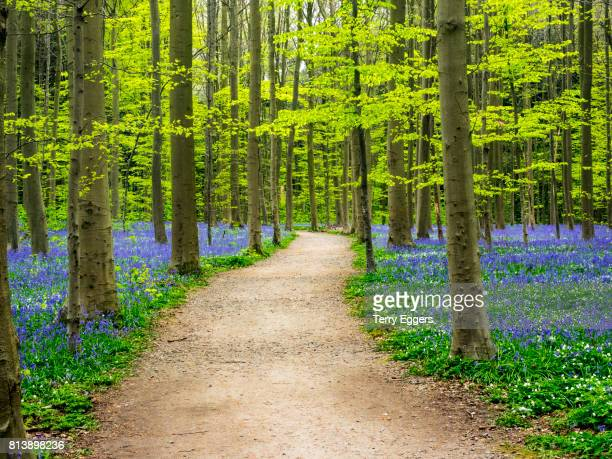 road through the blue fores - forens stock pictures, royalty-free photos & images